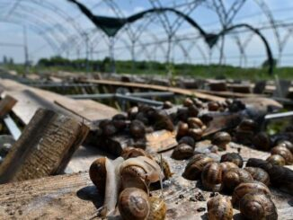 granja caracoles