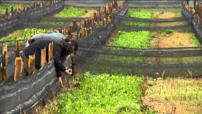 personas mirando granja de caracoles
